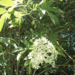 Rêveries Gasconnes C'est le printemps : la nature autour de nous se prépare à vous accueillir !title