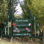 Rêveries Gasconnes L'élevage CARRAGHEEN, Poneys Connemara de Sporttitle